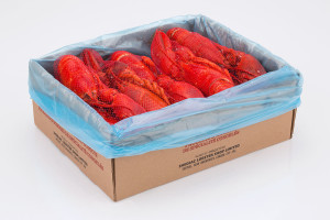 SLS_Cooked_Lobster_Netted_in_box_WEB